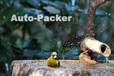 小鳥の水浴び