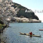 琵琶湖屈指の桜の名所・「海津大崎」には、マイカーで行けるの、行けないの?