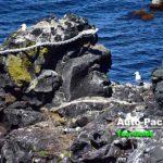利尻島にある「人面岩」と「寝熊の岩」は、行く価値あり?