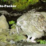 シマフクロウの捕食シーンが見られる、シマフクロウ オブザバトリー