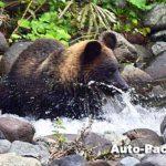 フォトギャラリー・ワイルドライフ特集 ~北海道の野生動物ウォッチング~