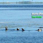 トドワラとセットで楽しめる。野付半島・尾岱沼のアザラシウォッチング