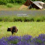 富良野で人気のジンギスカンがテイクアウトできる、ひつじの丘(星に手のとどく丘キャンプ場)