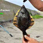 夏でもカレイがバンバン釣れる? 野付湾・尾岱沼漁港