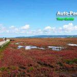 道東の秋の風物詩。北の大地を真紅に染め尽くす、能取湖卯原内のサンゴ草