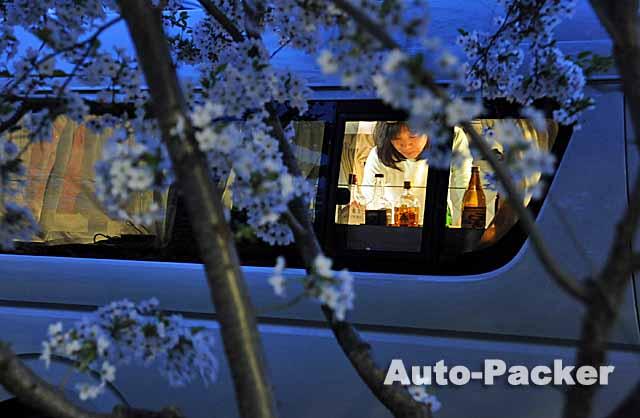 お花見車中泊