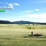 見渡すかぎりに広がる幌加内のそば畑は、日本一の名にふさわしい面積だ。