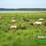 小清水原生花園の中の濤沸湖周辺では珍しい馬の放牧を見ることができる。