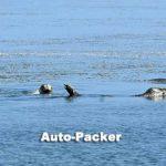 こちらは野付湾に棲むゴマフアザラシを観光船の上から撮影。