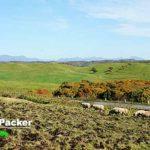 地平線が見える「多和平」。放牧されているのは羊だ。