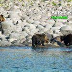 海岸にいるヒグマも見える、知床半島クルージング