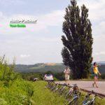 美瑛・パッチワークの路にある「ケンとメリー木」の撮影ガイド