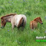 夏の小清水原生花園は、花だけでなく馬にも注目!