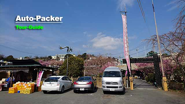 文化公園の駐車場