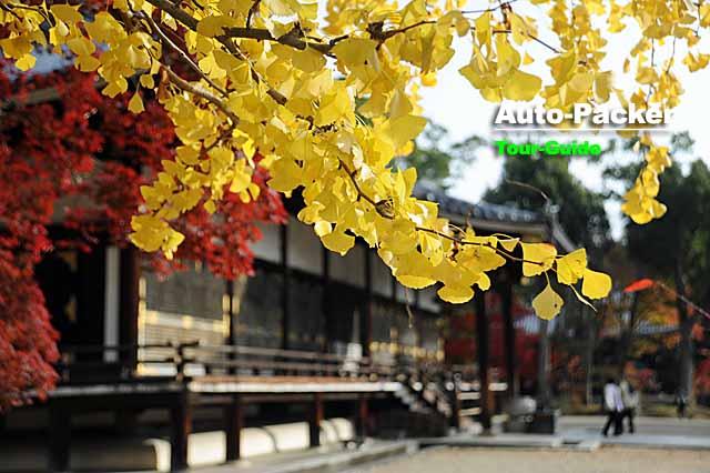 京都の観光スポット