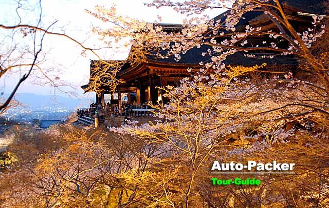 清水寺 桜のライトアップ