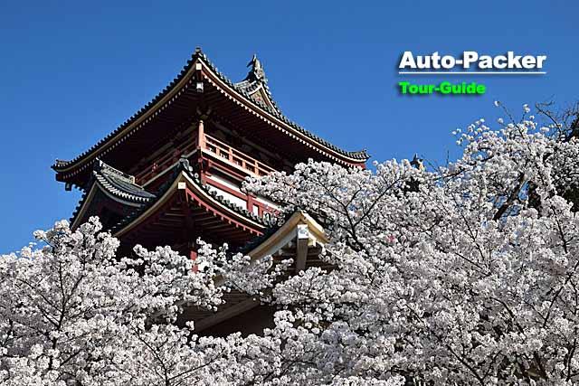 桜の名所 伏見桃山城