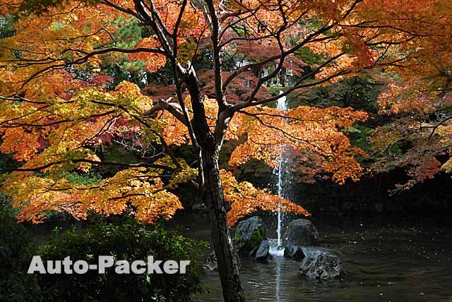 円山公園 秋